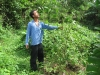 Bamboo Afforestation 1