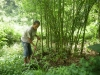 Bamboo Afforestation 2