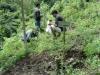 pengecekan-pemberian-pupuk-untuk-bambu-duri