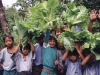 Organic Farming: After